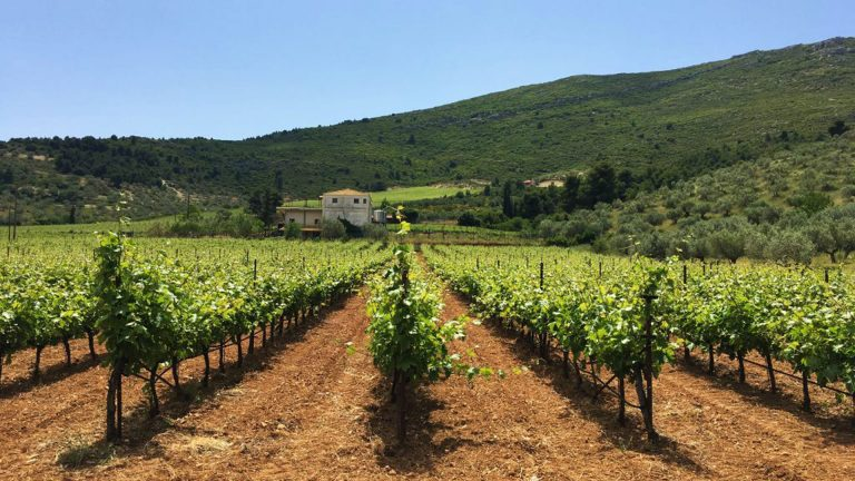 Nemea Private Wine Tour