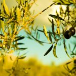 Olive Oil tour from Nafplio